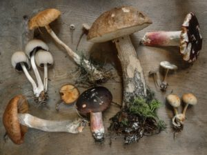 Pilze sind starke Energielieferanten